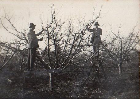 Pruning-_edited.jpg