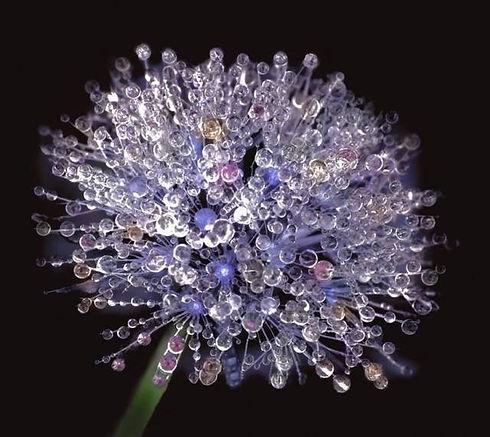 rund blomma med droppar