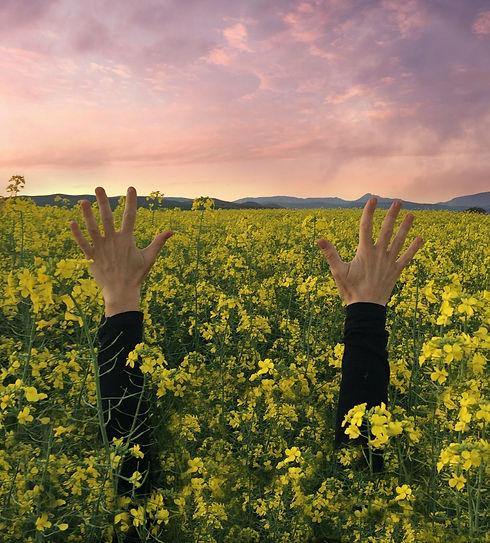 två händer som sträcker ut sig ur gult rapsfält mot rosa himmel