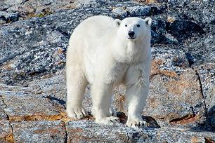 PB Nunavutab.jpg