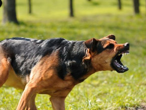 Naughty or Nice? Dispelling Myths About Canine Aggression