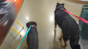 So Nice to Meet You! Or Not: Best Practices for Dog to Dog and Stranger to Dog Interactions