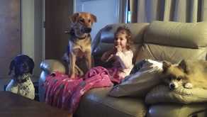 They're Not Dangerous If You Raise Them Right: Dogs and Kids