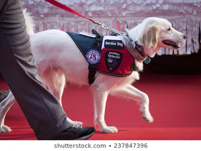 I Don't Bother You at Your Job: What to Do When You See a Service Dog