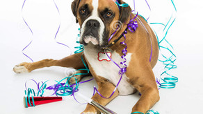 New Year, New Fears: Ways to Help Your Dog During New Year's Eve Celebrations