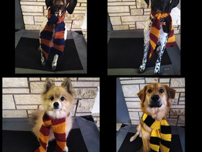 This is Not Hogwarts and I am Not Dumbledore: Sharing the Load of Training Your Dog