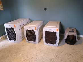 The Overwhelming Choices in Pet Care, How to Choose