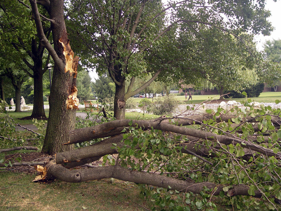 Yard & Storm Debris Clean-up By The Pros