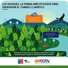 Infografía_2_-_Los_bosques_eficientes-01