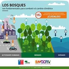 los_bosques-04(1).jpg