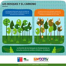 Infografía_4_-_Los_bosques_y_el_carbono-