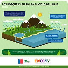 Infografía_10_-_Bosques_y_ciclo_del_agua