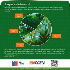 Infografía-A(1).jpg