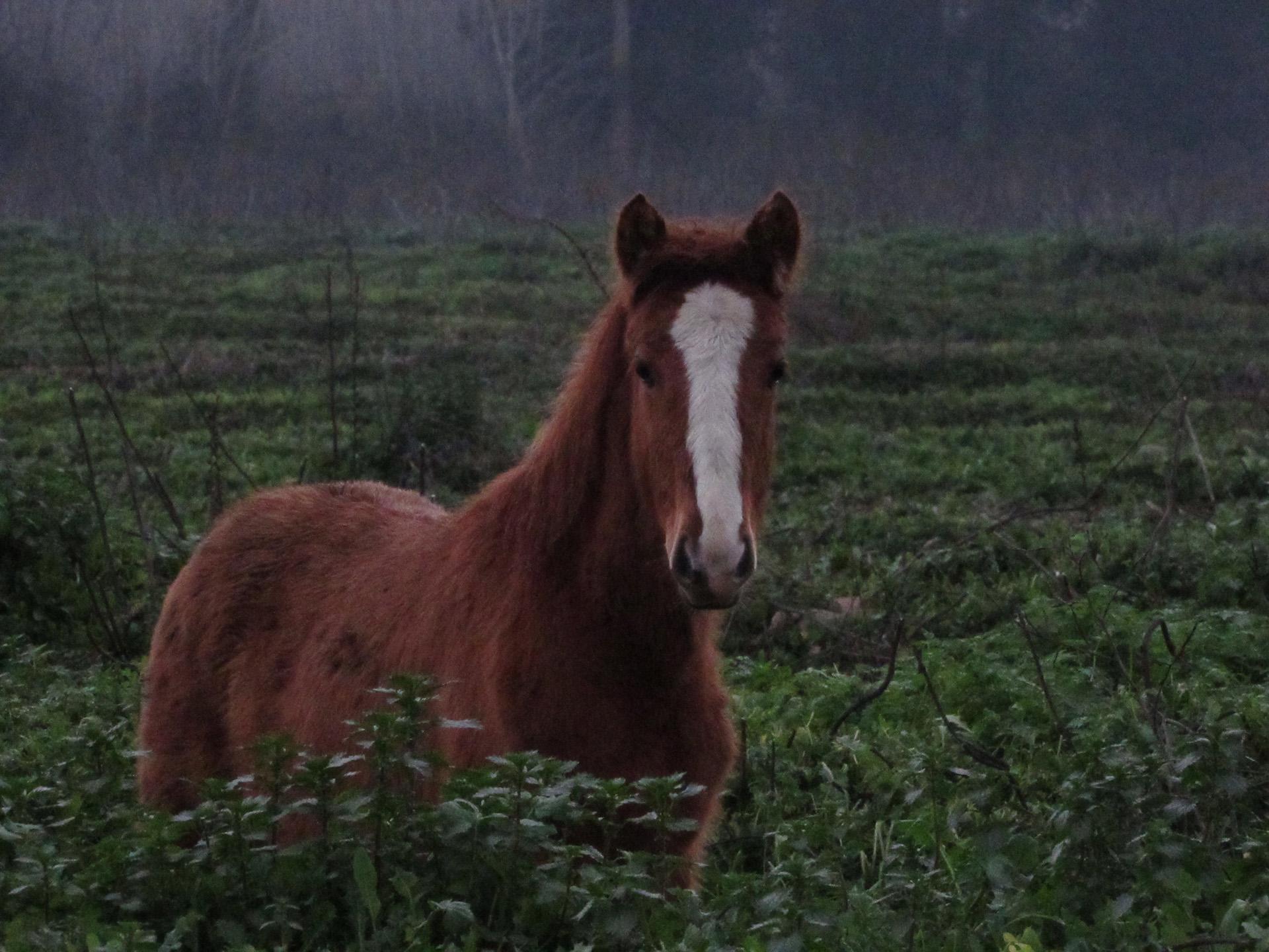 Libre caballo