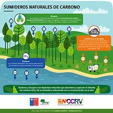 Infografía_7_-_Sumideros_de_carbono-01.j
