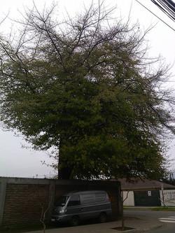 El árbol de la sabiduria