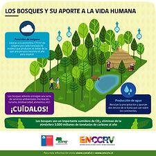 Infografía_1_-_Los_bosques_y_su_aporte-0