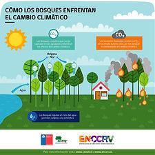 como los bosques enfrentan el cambio cli