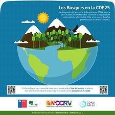 Infografía_3_-_los_bosques_en_la_cop25-