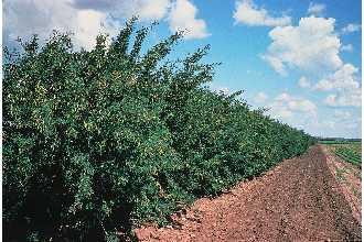 Source: plants.usda.gov