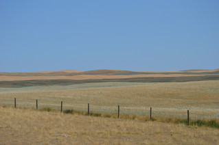 Managing Drought-Stressed Pastures