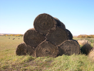 How Hay is Stacked Does Make a Difference