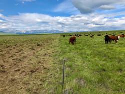 Soil Sampling Waldron July c-2