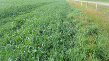 3 Ways to Achieve a 266% ROI with Cover Crops