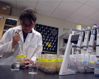 UNH Research: Microbial Traits, not Plants, Determine Abundance of Soil Organic Matter