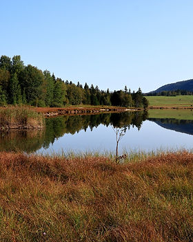 lake-5577094_1920.jpg