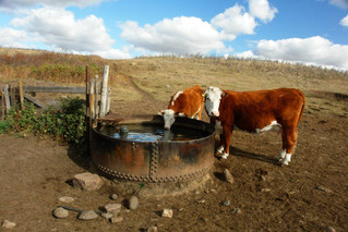 The Importance of Monitoring Livestock Water Quality