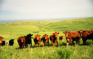 Forages & Grasslands: How They Contribute to the Preservation of Biodiversity