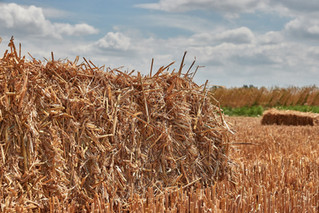 How to Maintain Forage Quality during Harvest and Storage