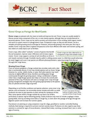 Cover Crops as Forage for Beef Cattle
