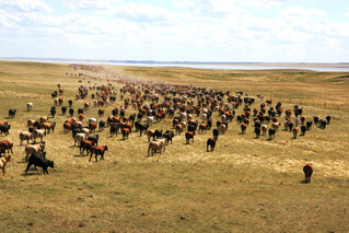 Understanding the Intensive in Intensive Grazing