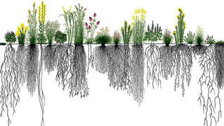 Leaving the grass – and the carbon – in the ground