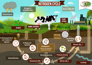 Get more bang from your nitrogen buck