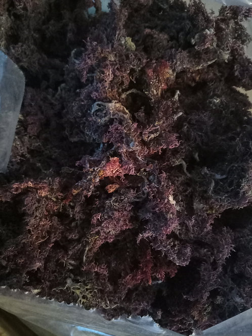 Purple SeaMoss 1oz (Limited 3 oz per order)