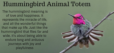 hummingbird animal totem.png