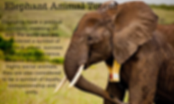 elephant animal totem.png