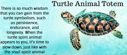turtle animal totem pinterest.png