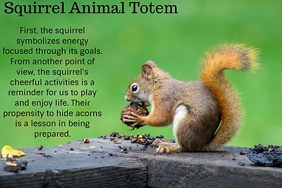 squirrel animal totem.png