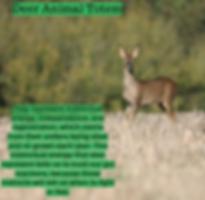 deer animal totem.png