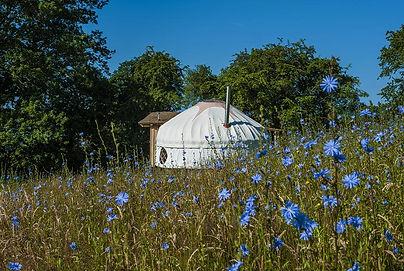 Mimi's Tree Yurt