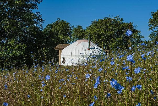 Mimi's Tree Yurt cornflowers Boteti Getaways