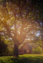 Field maple tree Bee's Bower Boteti Getaways