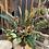 Thumbnail: Dried flower arrangement