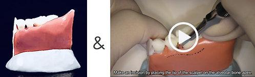 3D Printing模型+術式解説動画
