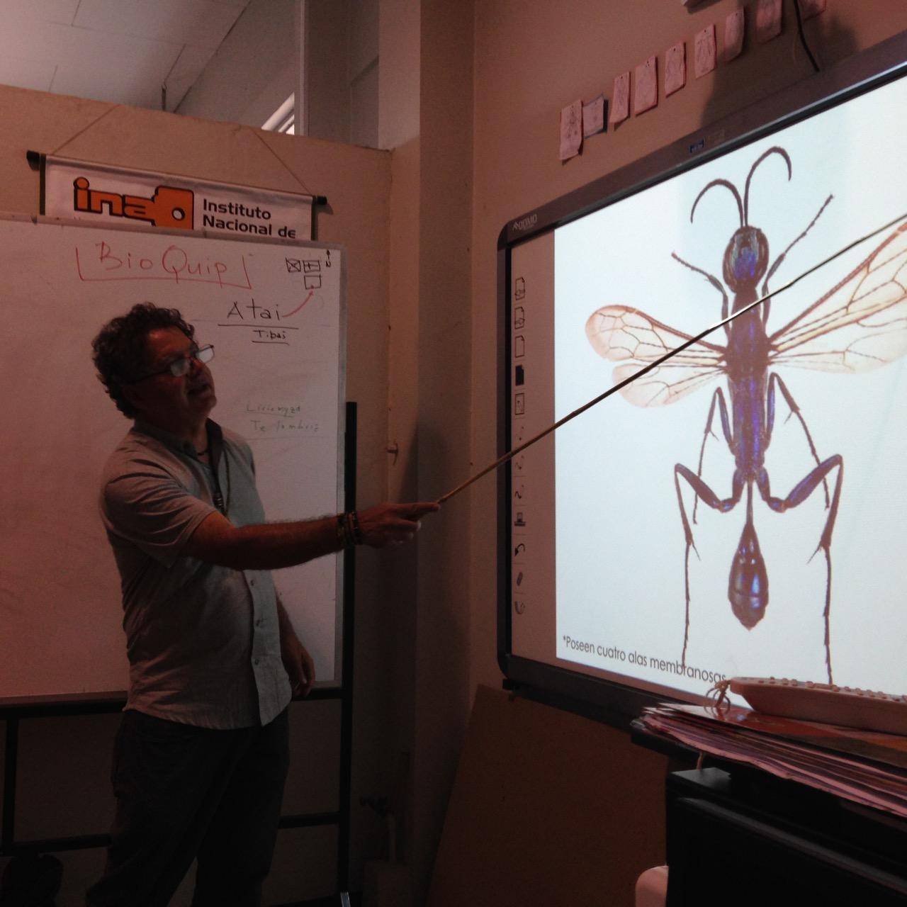 Clase morfología de insectos
