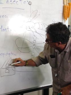 Clases de preparación de insectos